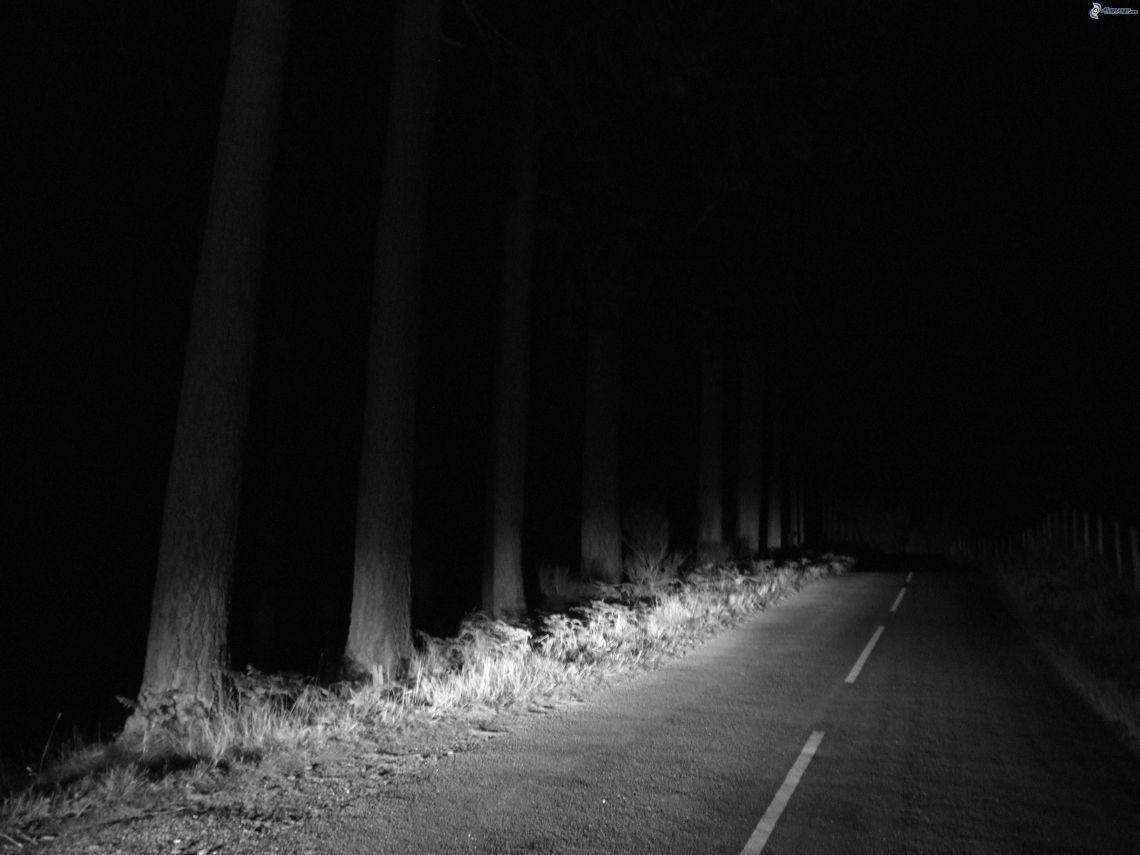 camino-por-el-bosque-bosque-de-noche-blanco-y-negro-197807